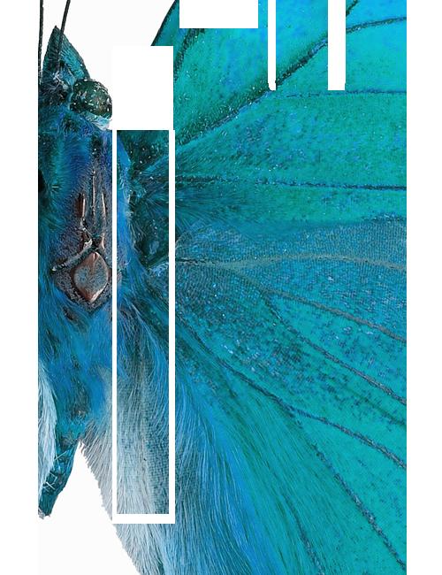 Bränditoimisto Lumojin etusivun perhoselementti
